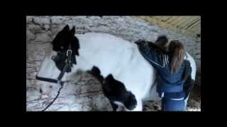 Horse riding school in Ireland 2 (Stable management)