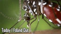 Where Mosquitoes Go During the Daytime