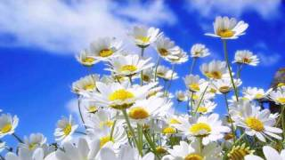 Valentin Huedo - Campo de flores