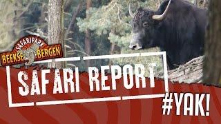 Iedere week houden we je via Safari Report op de hoogte van alles w...
