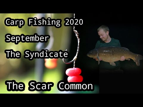 Carp Fishing 2020 - September - Syndicate - The Scar Common...