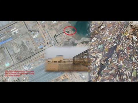 Tiết lộ phát hiện ống xả thải ngầm dưới biển từ Formosa Vũng Áng