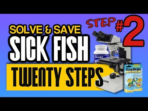 Fish That Are Freezing Cold In Winter? Why It Matters: Step 2 Of 20