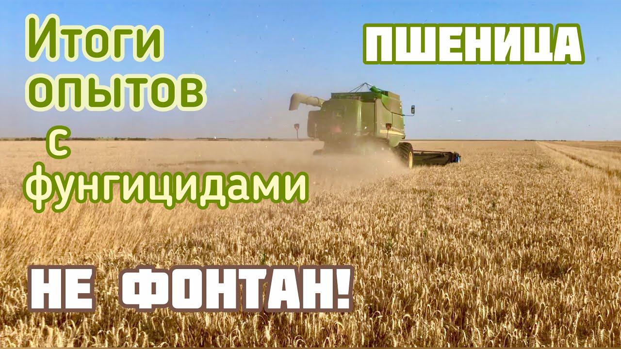 Итоги опытов с фунгицидами на озимой пшенице