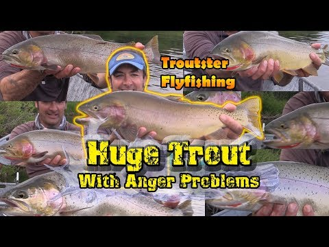 Huge Cutthroat Trout and Cutbows up to 6 pounds!