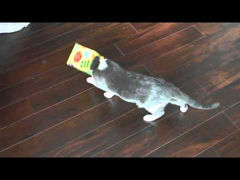 Cat's head stuck in tissue box