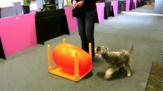 Triebball Lessons Canine Communications, Gosport