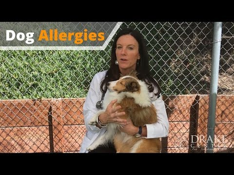 Dog Allergies: What You Need to Know