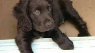 Bruno's first 3 months