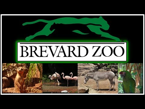A trip to the Brevard Zoo