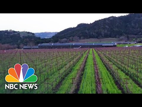 Silver Oak Winery CEO On Sustainable Wine And The Business Behind It | Better | NBC News