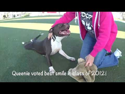 Please Help Save Sweet Queenie! Very Urgent or She Will Be Euthanized!