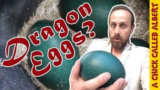 Dragon Eggs in my new incubator thumbnail