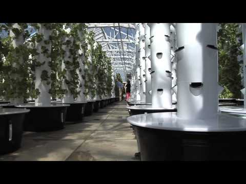 Successful Turf Growers Diversify, Now Growing Hydroponic Lettuce