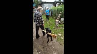 Дрессировщик из деревни где-то под Калугой и его умная собака