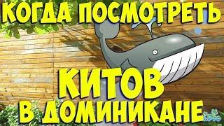 видео Где и когда можно увидеть китов