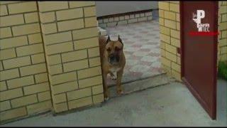 Пёс не выходит со двора без разрешения хозяина)) [Рыбачёв и Пёс]