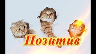 Прикольные кошки собаки Fanny animals Создай себе хорошее настроение