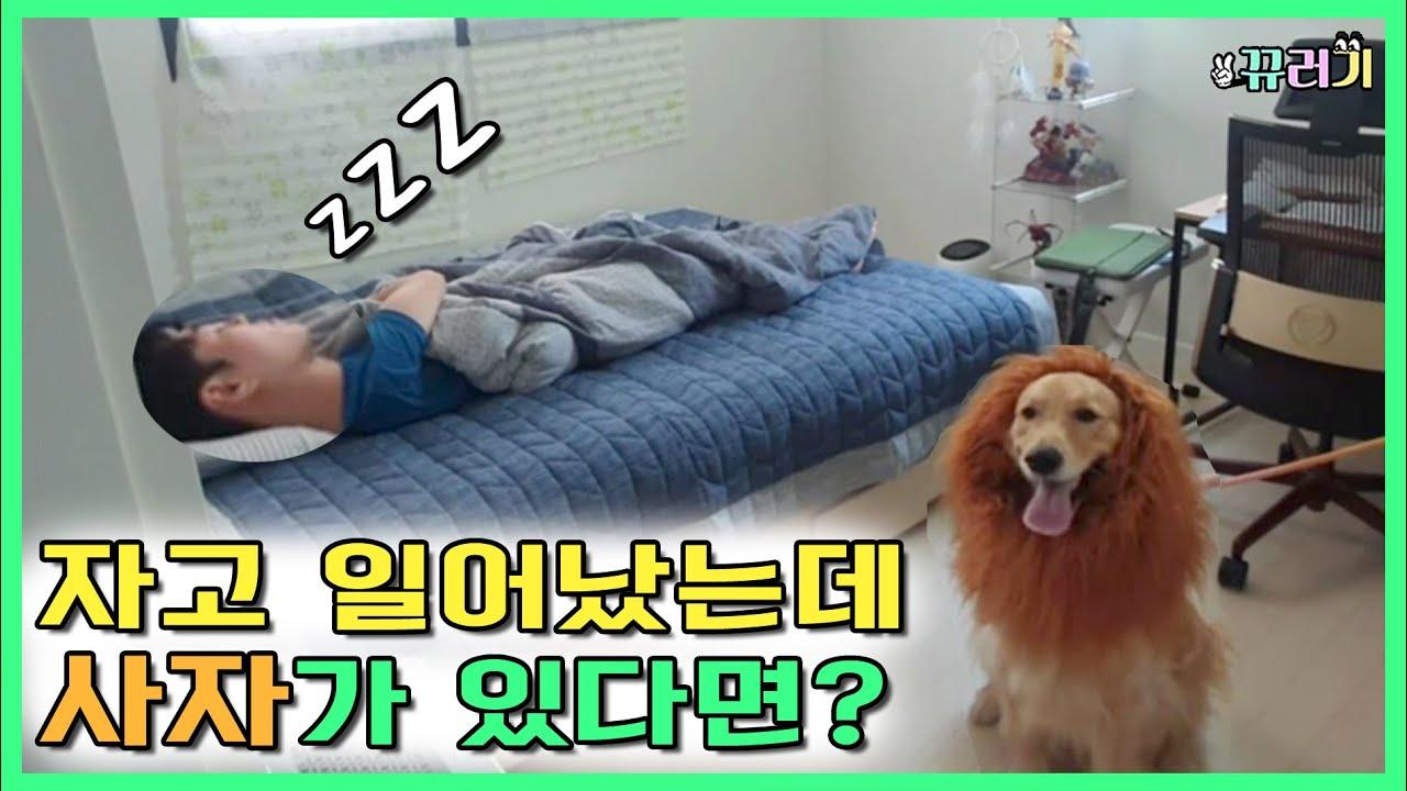 (SUB) 꿀잠 자고있는 친구 사자로 깨우기ㅋㅋㅋㅋ(feat.유튜버편)