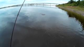 Рыбалка на Северной двине (ловля окуня у моста)