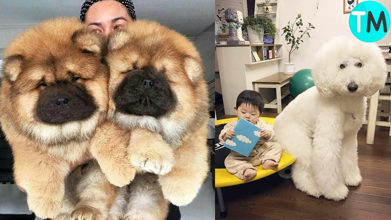 Los 10 Perros Más Hermosos Del Mundo Youtube