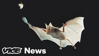 Scientists Are Tracking Coronavirus — From Bats to New Yorkers