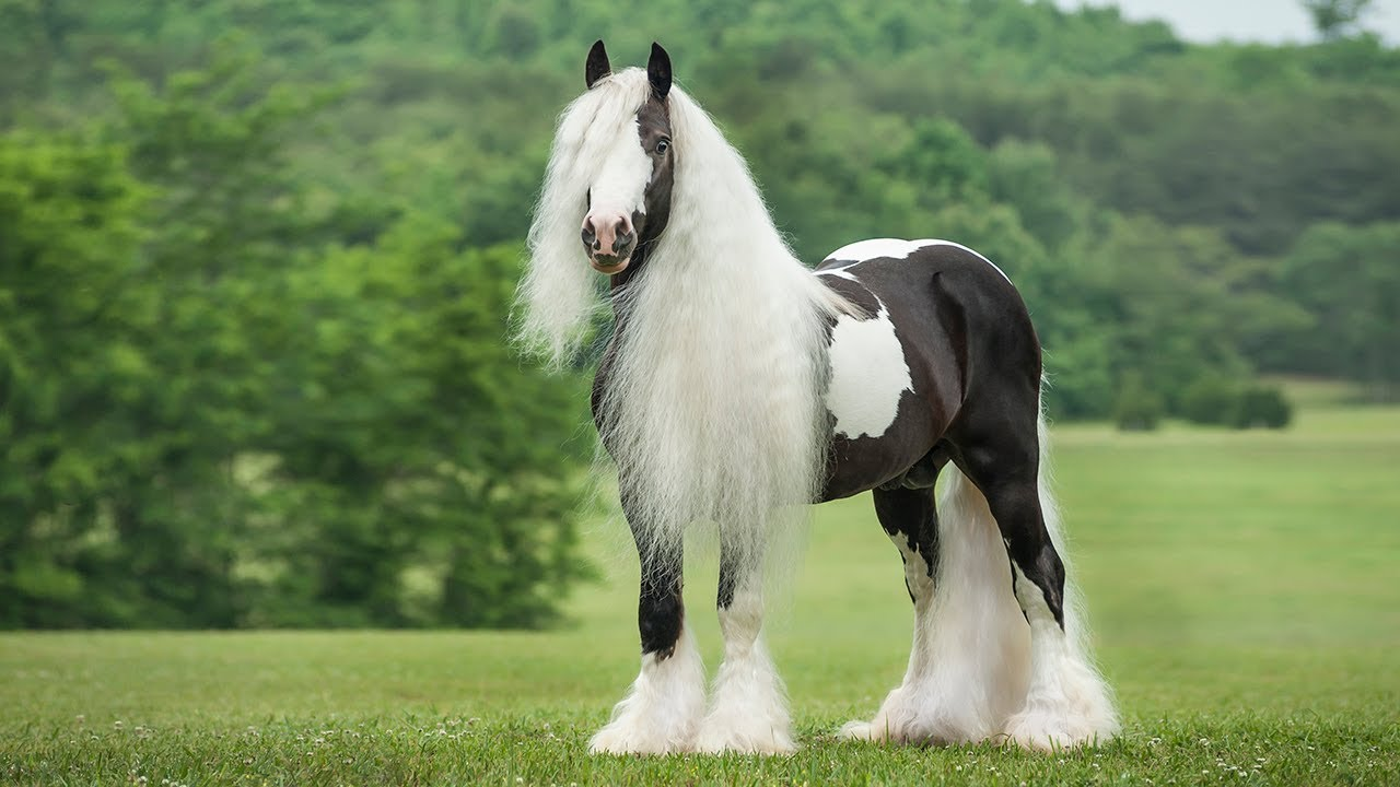 Beutiful Houses Most Beautiful Horse Breeds In The World  Youtube