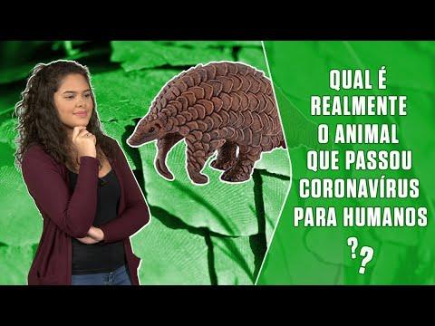 Qual é Realmente O Animal Que Passou Coronavírus Para Humanos? | SUPER Responde