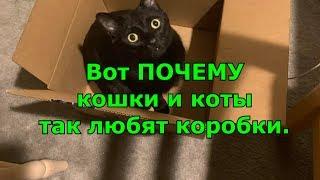 Вот ПОЧЕМУ кошки и коты так любят коробки.