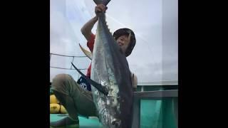 2017 07 20 相模湾キハダマグロ 26kg thumbnail