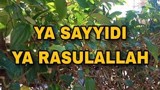 Ya Sayyidi Ya Rasulallah Sholawat Ya Sayyidi Arab Latin Terjemah