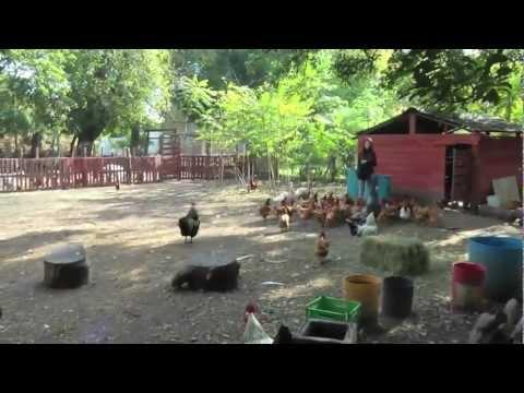 Granja Refugio  El Paraíso de los Animales