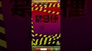 【ログレス】禁忌種 カースド・メル  ソロ狩り