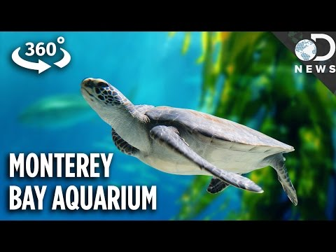 The Incredible Tech Inside California's Most Famous Aquarium (360 Video)