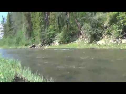 Любимая пища Медведя пучка и трехлистная черемша / Девственная тайга