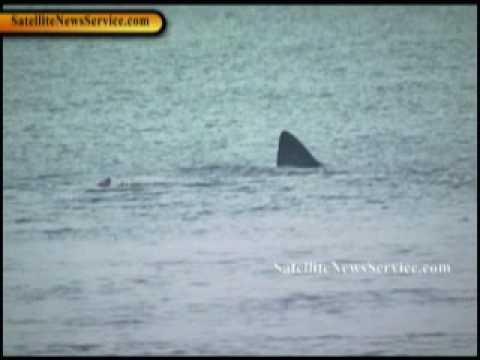 PLYMOUTH, MA- 15 Foot Basking Shark Spotted Near White Horse Beach (08-19-10)