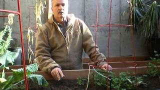 Grow A Winter Garden In Cold Climates