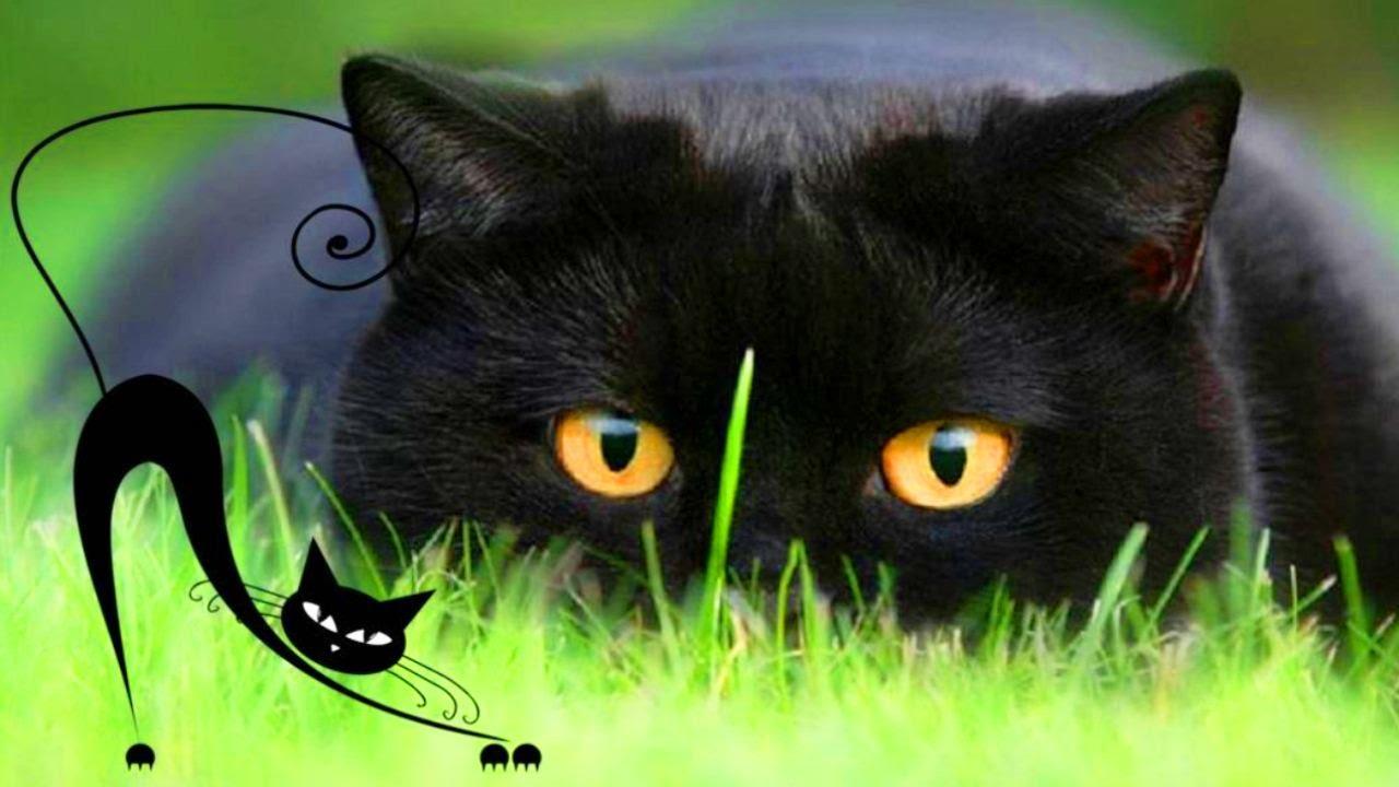 КАК нарисовать СИМПАТИЧНОГО Чёрного КОТА в технике пастель