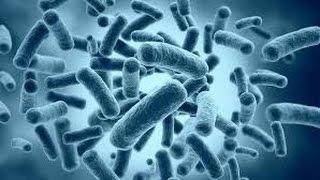 """Урок №30 """"Царство Бактерии"""""""