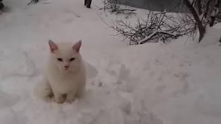 Voronezh.Кот.Воронеж завалило снегом 10 марта 2018