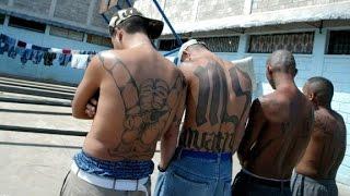 MS 13  America's most dangerous street gang?