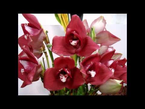 Орхидеи - Ликаста, слайд-шоу.