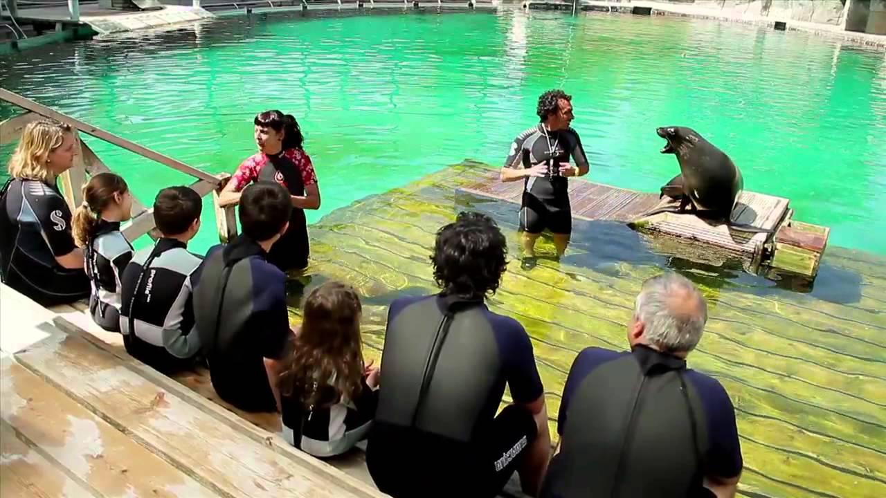 Sum rgete en un ba o vip con osos marinos youtube - Banarse en madrid ...