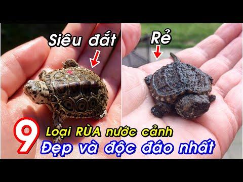 9 loài Rùa nước được nuôi làm cảnh phổ biến nhất. Có con giá tới vài triệu đồng!
