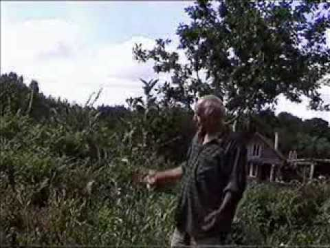Permaculture Own Root Fruit Trees And The Coppice Orchard Youtube