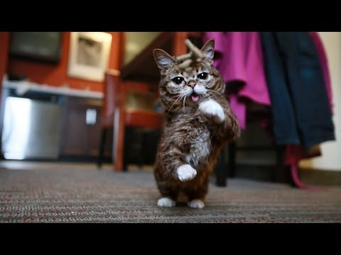 BUB PLAYS FOREVER