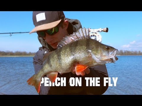On The Fly - Big Winter Perch