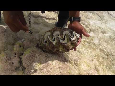 Shells, clam mollusk, corals, Christmas Island, Kiribati