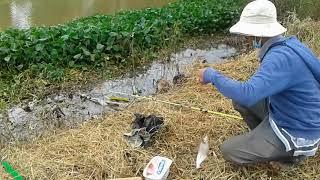 câu cá thiên nhiên[câu cá thiên nhiên-điểm câu là rất quan trọng