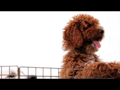 How To Find A Dog Breeder | Puppy Care